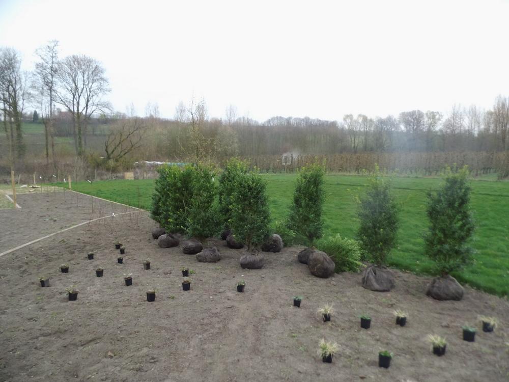 Planten van plantgoed